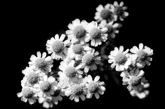 Fleurs-10