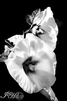 Fleurs-8